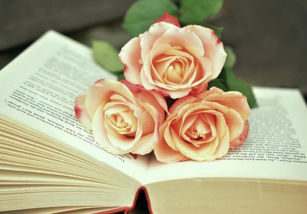 book-1771073_960_720