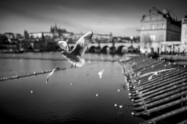 Bielik_Istvan_Csehorszag_Praga_2016__Bielik_Istvan_...