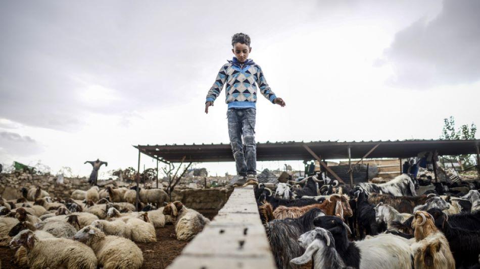 Az MTI fotósa első díjat nyert Izraelben